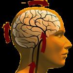 Симптомы и признаки дистонии сосудов головного мозга
