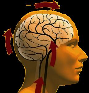 Дистония сосудов головного мозга: симптомы, признаки и лечение
