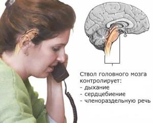 Что контролирует ствол головного мозга